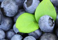 Borůvkové-smoothie-s-jogurtem-recept